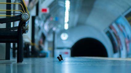 The winning subway shot!