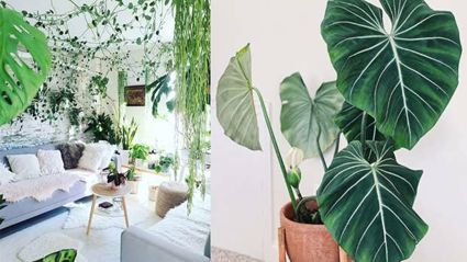 These Kiwi stores will replace your plants if you accidentally kill them!