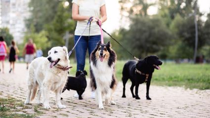 Woman left red-faced after accidentally publishing x-rated dog walking advertisement