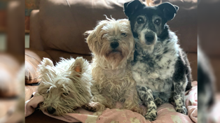 Queenie (right) with her room mates, Bonnie 10, Bo, 12. Facebook