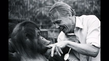 Happy 94th Birthday David Attenborough! Watch: Some of His Greatest Television Moments