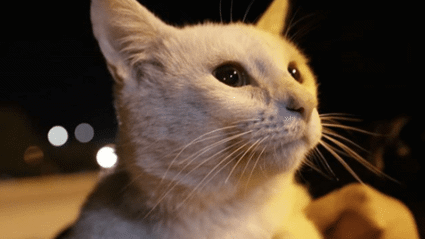 Stray Cat gets Adopted after Picking which Food he Wants from the Supermarket