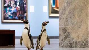 WATCH: Penguins Enjoy 'A Morning Of Fine Art' At Local Museum