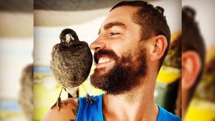 Man Befriends stray Magpie and now the Two are Inseperable