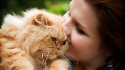 There is now an app that translates your cat's meows into words so we can understand them